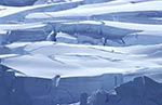 antarctic;_Antarctic_Peninsula;_Antarctica;_Arctowski_Peninsula;_ecosystem;_environment;_glacial;_ice;_landscapes;_scenery;_scenic