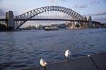 Australia;Australian;South_Pacific;Oceania;Downunder;New_South_Wales;Sydney_Harbour_Bridge