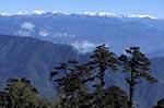 Bhutan;Bhutanese;Asia;Kingdom;Dochula;Dochula_Pass;Himalayas;mountainous;mountains;Phunaka_District;Trees