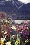 Canada;Canadian;North_America;Atlin;British_Columbia;Flowers;window