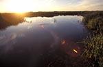 Canada;Canadian;North_America;Prairies;Hecla;Provincial_Park;Manitoba;Grassy_Narrows_Marsh