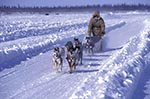 Canada;Canadian;North_America;Arctic;dogs;domestic_animals;fauna;Inuvik;male;mammals;man;men;North_West_Territories;Northwest_Territories;people;Canadians;person;persons;zoology;Musher_with_sled_dogs