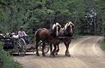 Canada;Canadian;North_America;Maritimes;Acadia;animal_transportation;Caraquet;New_Brunswick;Horse_drawn_carriage;Village_Historique_Acadien