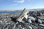 Canada;Canadian;North_America;Arctic;Dead_Mans_Island;Driftwood;ecosystem;environment;glacial;global_warming;ice;landscapes;Nunavut;Nunavut_Territory;polar;scenery;scenic