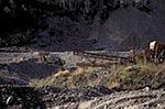 Canada;Canadian;North_America;Yukon;Arctic;Bonanza_Creek;Dawson;miners;mining;Tailing_Piles;Yukon;Yukon_Territory