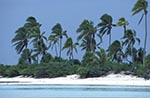 Cook_Islands;South_Pacific;Oceania;island;Polynesian;beaches;coasts;seashores;seaside;trees;plants;botany;botanical;flora;tropical;Palm_trees;Tapuaetai;One_Foot;island;Aitutaki