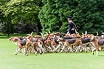 France;French;Europe;Europa;Hunting_dogs;Park;Château_de_Cheverny;Cheverny;Château_de_Cheverny;dogs;domestic_animals;fauna;hunt;hunting;mammals;man;men;male;person;people;zoology