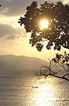 India;Indian;Indian_Subcontinent;Asia;South_Asia;Bharat;Andaman;Andaman_Islands;Chiriya_Tapu;Indian_Ocean;islands;Mangrove;sunset;tropical