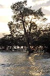 India;Indian;Indian_Subcontinent;Asia;South_Asia;Bharat;Andaman;Andaman_Islands;Chiriya_Tapu;Indian_Ocean;islands;sunset;Tree;tropical