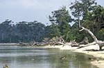 India;Indian;Indian_Subcontinent;Asia;South_Asia;Bharat;Andaman;Andaman_Islands;Beach;Indian_Ocean;islands;stumps;Tree;tropical;Wandoor