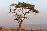Mali;Malian;Africa;West_Africa;Bamako;tree