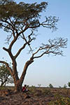 Mali;Malian;Africa;West_Africa;_persons;people;Bamako;tree