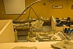 Mexico;Mexican;Latin_America;North_America;Central_America;Coahuila;Museo_del_Desierto;desert;museum;palaeontology;Palaeontology_laboratory;Saltillo
