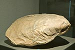Mexico;Mexican;Latin_America;North_America;Central_America;Coahuila;Museo_del_Desierto;desert;fossil;museum;oyster;palaeontology;Saltillo