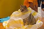 cats;felines;domestic_animals;fauna;mammals;Central_America;Latin_America;Mexican;Mexico;North_America;Oaxaca;San_Bartolo_Coyotepec