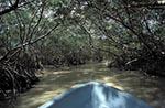 Mexico;Mexican;Latin_America;North_America;Central_America;boats;vessels;transportation;Boat;mangroves;Celestun;Yucatan