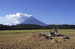 agricultural;agriculture;countryside;farmer;farming;island;peasant;persons;people;rural;tropical;volcanic;volcano;volcanoes;Luzon;Albay;Men;field;Mayon;Volcano;Philippines;Philippine;Filipino;Asia;Southeast_Asia