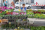 Slovenia;Slovene;Slovenian;Europe;Eastern_Europe;Europa;child;childhood;children;girl;girls;kids;marketplaces;markets;merchants;people;person;persons;retailers;salespersons;sellers;shopping;vendors;youngsters;Yugoslavia;Ljubljana;Flower;vendor;Market