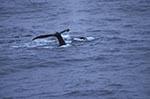 South_Shetland_Islands;Antarctica;Antarctic;glacial;ice;polar;research;sciences;scientific;scientist;Southern_Ocean;whales;mammals;cetaceans;mammals;marine_life;sea_life;animals;fauna
