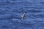 South_Shetland_Islands;Antarctica;Antarctic;birds;ornithology;animals;fauna;glacial;ice;polar;research;sciences;scientific;scientist;Southern_Ocean