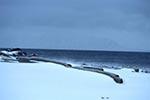 Arctic;Norway;Norge;Europe;Polar;Scandinavia;Norwegian;Spitsbergen;Svalbard;Worsleyneset;Worsely_Point;Kongsfjorden;Kings_Fjord