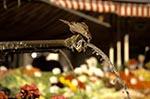 Switzerland;Schweiz;Suisse;Svizzera;Swiss;Europe;Europa;animals;Bern;Berne;birds;fauna;fountain;ornithology;Sparrow;UNESCO;World_Heritage_Site