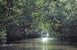 Trinidad_Tobago;Trinidad;island;South_America;Trinidadian;Caribbean;islands;tropical;Mangroves;Caroni;Caroni_Swamp_Bird_Sanctuary