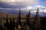 North_America;USA;USA;United_States_of_America;Americans;Denali_National_Park;Alaska;United_States;Tundra;vegetation;fall