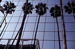 North_America;USA;USA;United_States_of_America;Americans;Los_Angeles;California;United_States;Palm;trees;reflection;office;building