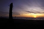 North_America;USA;USA;United_States_of_America;Americans;Oregon;United_States;Logs_Beach;beach;Tillamook;Bay;sunset
