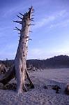 North_America;USA;USA;United_States_of_America;Americans;Oregon;United_States;Logs_Beach;beach;Tillamook;Bay