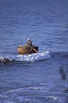 Vietnam;Vietnamese;Asia;Indochina;Southeast_Asia;fisherman;fishermen;fishing_industry;male;man;men;people;person;persons;people;Phan_Thiet;Binh_Thuan;Man;rowing;round;basket;fishing;boat;Mui_Na;Beach