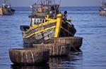 Vietnam;Vietnamese;Asia;Indochina;Southeast_Asia;fisherman;fishermen;fishing_industry;Phan_Thiet;Binh_Thuan;Fishing;boat;round;basket;fishing;boats;Mui_Na;Beach